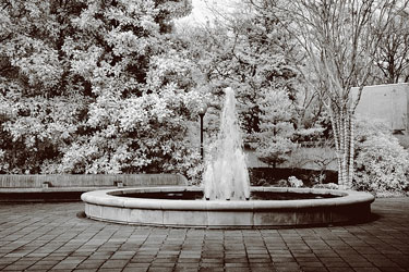 water fountain at a Georgia botanical garden - infrared photo