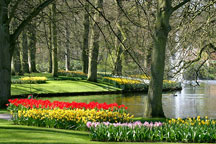 Waterfall Landscapes, Natural Lawns, Landscaping, Planting Flowers